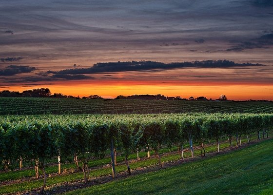 Depression Treatment Courtesy of Nature Wolffer's Estate At Sunset - What A Vineyard Can Teach Us About Rebuilding Our Lives