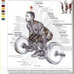 beginner deadlift workout routine