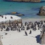 life after divorce penguins