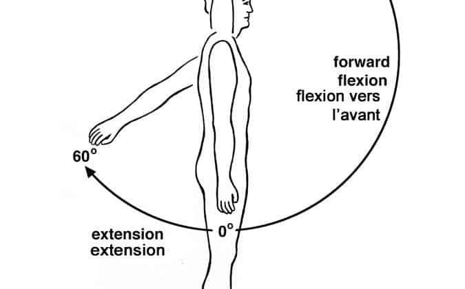 Shoulder Flexion Muscles and Joint Movements for NASM Certification