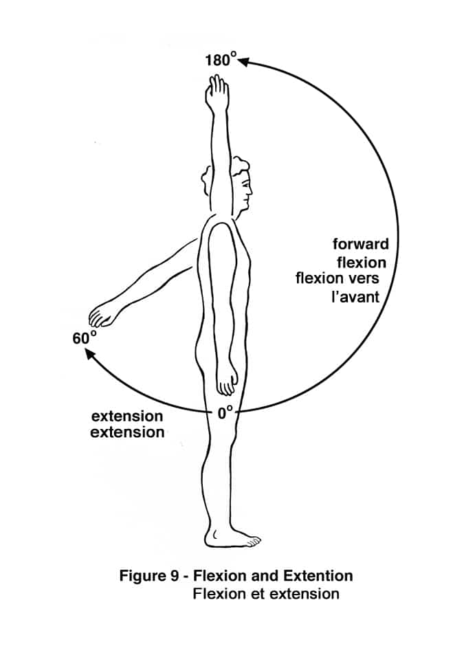 Kinesiology anatomical position - shoulder flexion and extension