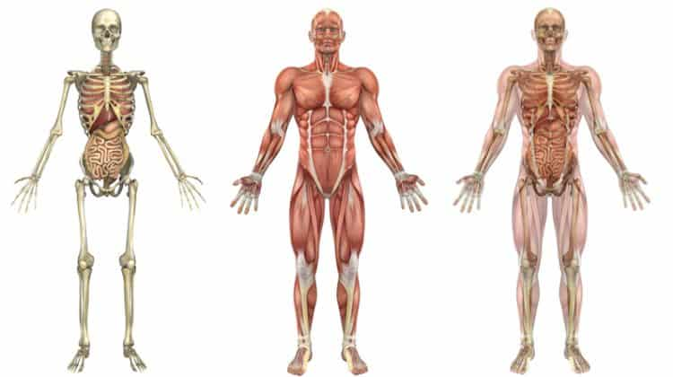 What is Kinesiology Used For? Why Study Kinesiology? NASM Lesson 1