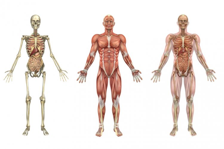 kinesiology - what is kinesiology