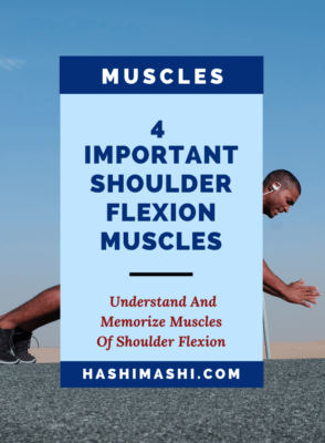 Shoulder Flexion: 4 Most Important Muscles to Know and Memorize for NASM CPT
