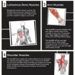 what muscle groups do deadlifts work credit https://hashimashi.com