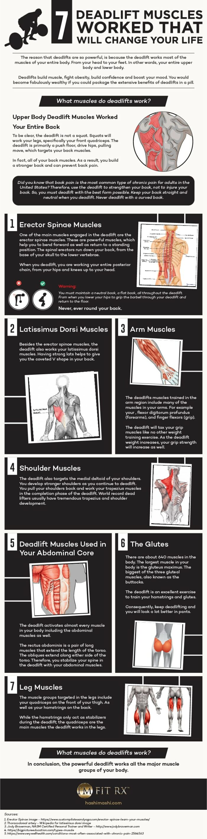 deadlift muscles used infographic credit HashiMashi.com