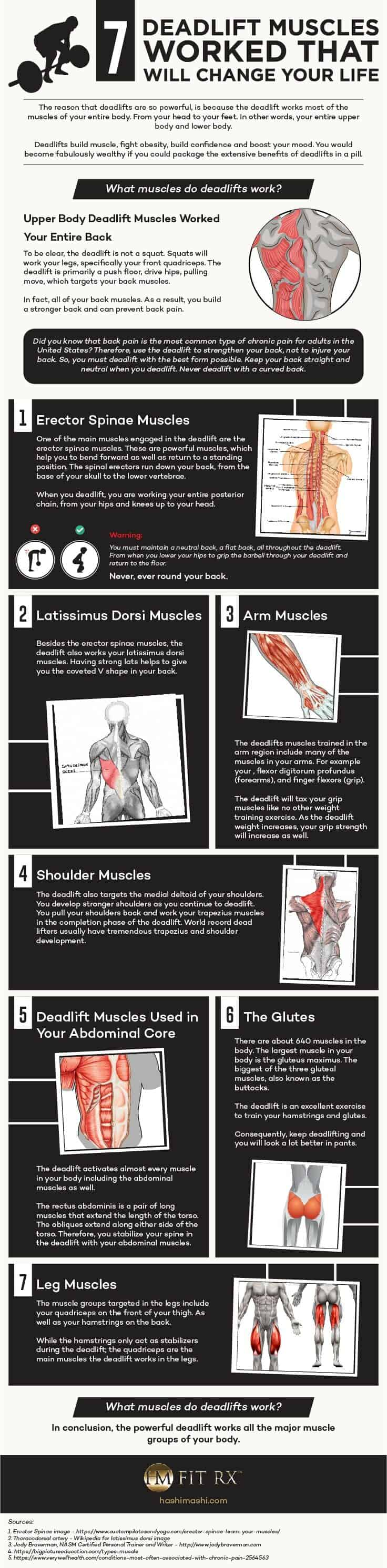 what muscle groups do deadlifts work infographic credit hashimashi.com