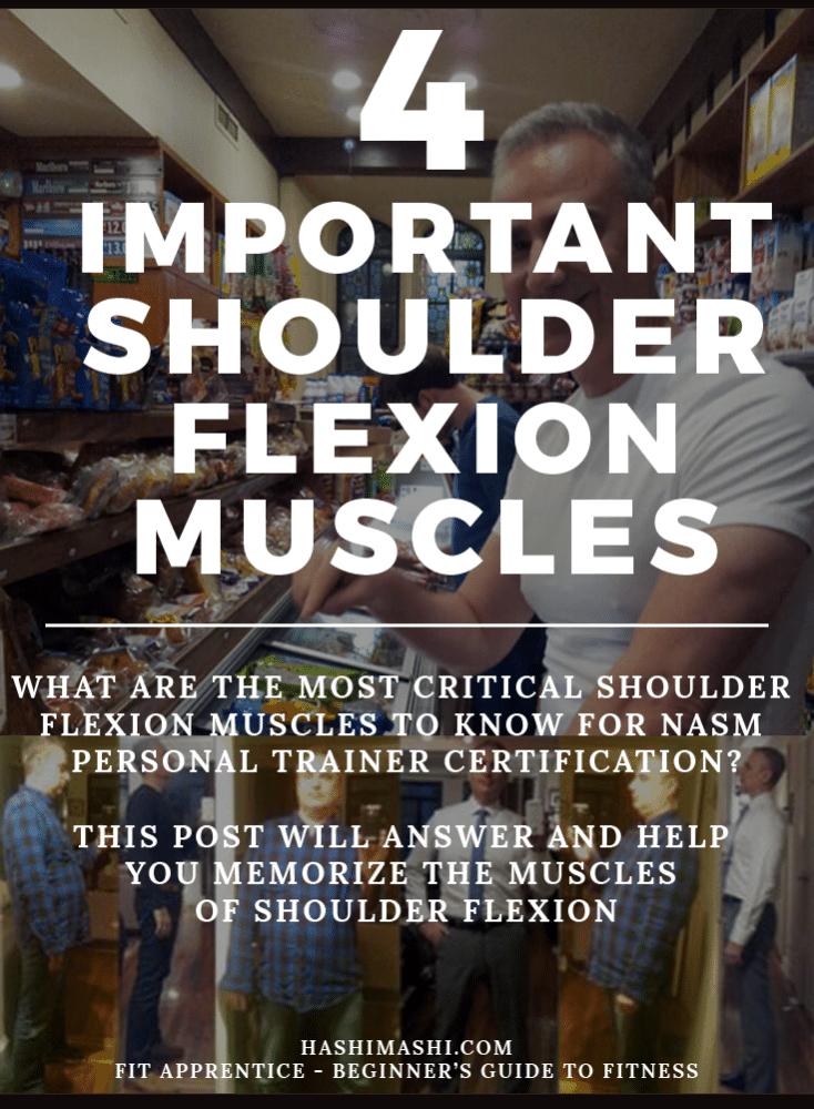 shoulder flexion muscles
