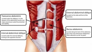 Prone Iso-Abs or Planks work your abdominal muscles Image Credit anatomyinfo.com