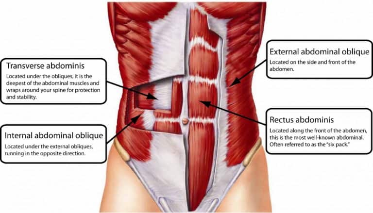 pull-ups muscles worked abdominal muscles Image Credit anatomyinfo.com