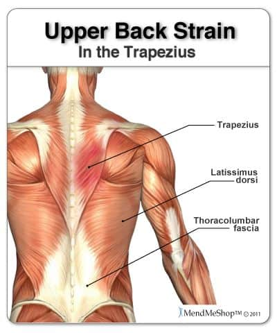 upper back muscles used in squats Image Credit MendMeShop on Pinterest